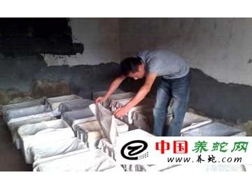 干撒式发酵床养蛇优势
