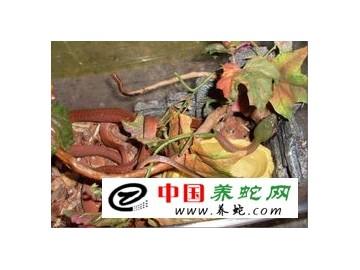 cctv7每日农经养蛇
