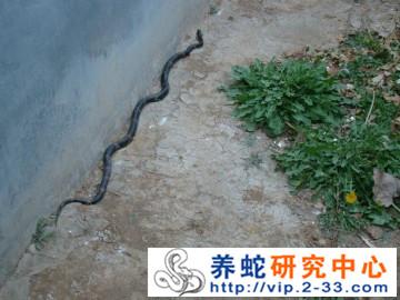 哪里可以学习养蛇