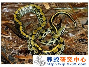 山西有养蛇的吗