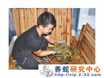 學(xue)習養(yang)蛇