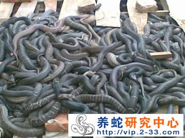 如何养蛇 ()