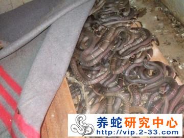 湖南养蛇场