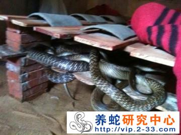 广西灵山县养蛇基地