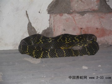 河南有养蛇的吗