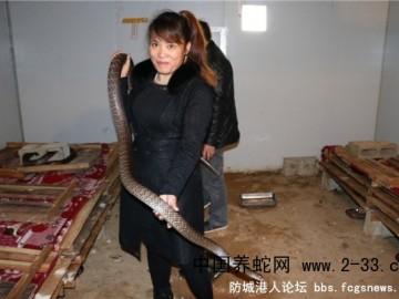 广西灵山县新富养蛇场