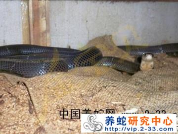 养蛇发酵床