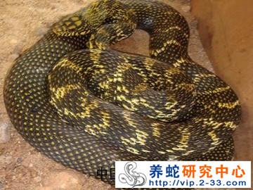安徽养蛇基地