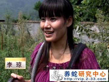cctv8致富经养蛇 李琼
