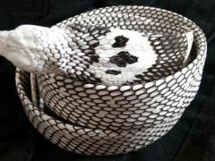 蛇产品加工 (13)