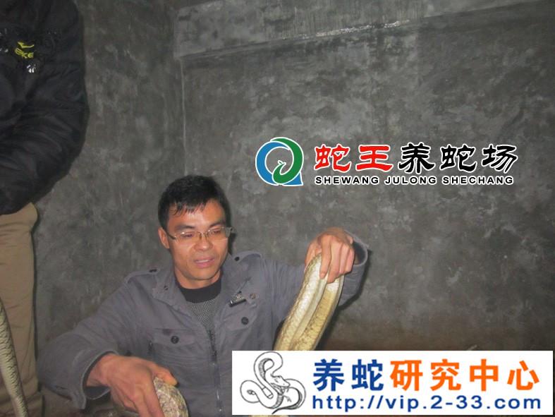 学员学习养蛇技术