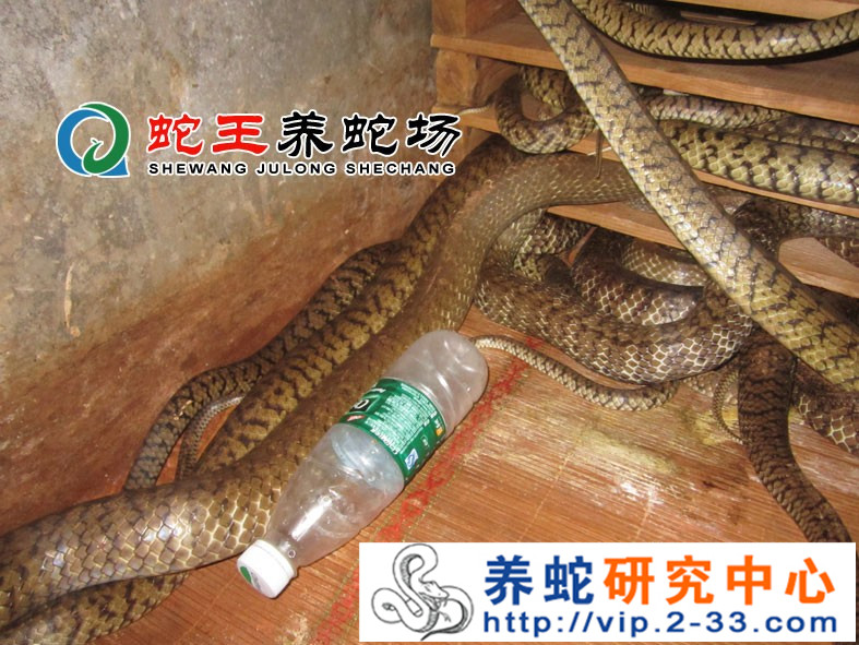 水律蛇养殖