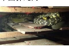 常年高价收购 大王蛇,大小条清场,病蛇,冰冻蛇