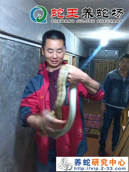 养蛇技术培训照片