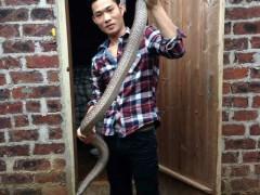 养出好大一条的水律蛇 (7)
