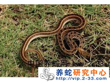 蛇场的综合管理