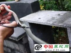 杀蛇剥皮和剔骨的方法