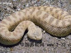 蛇毒中毒致心搏骤停的抢救与治疗