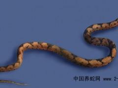 中国云南省蛇类资源分布狀况