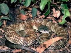 蛇毒中毒致多系统器官衰竭的防治