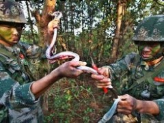 蛇的寄生虫感染
