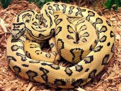 蛇的厌食及消化不良