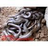 供应优质水律蛇眼镜蛇成品蛇2000斤