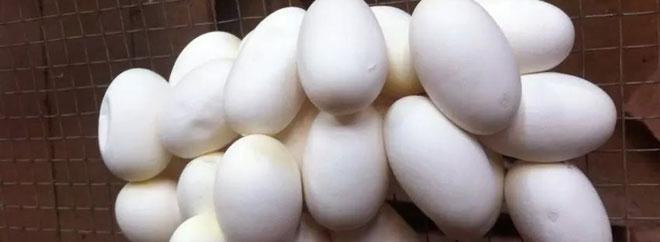 2015年蛇蛋价格行情