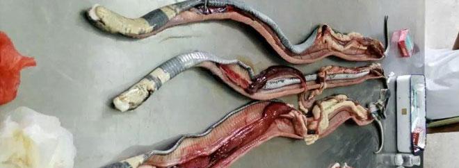 蛇病防治要懂科学的方法
