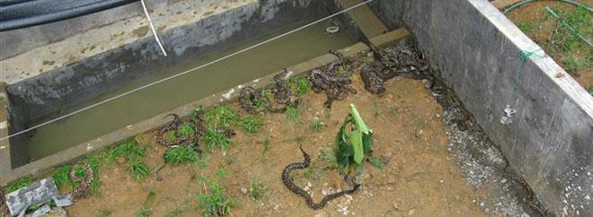 蛇类养殖示范基地