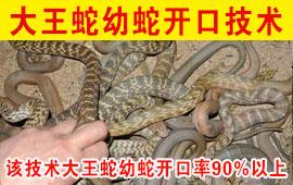大王蛇幼蛇开口技术
