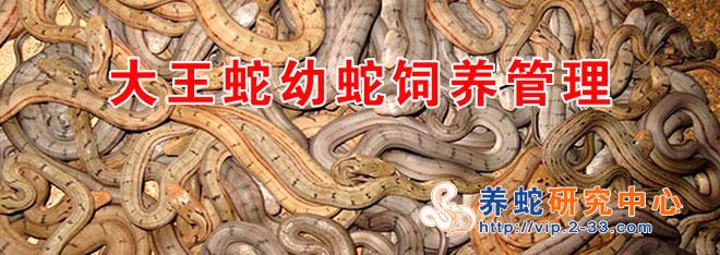 大王蛇幼蛇饲养管理