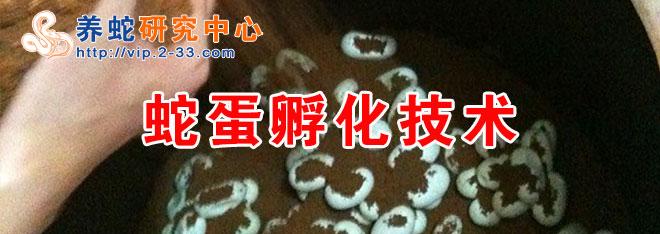 蛇蛋孵化技术