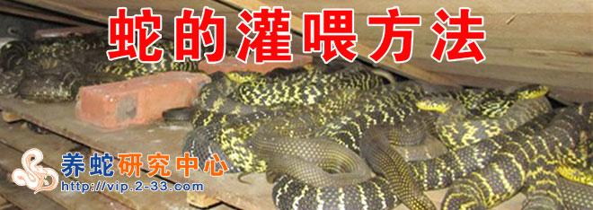 蛇的灌喂方法