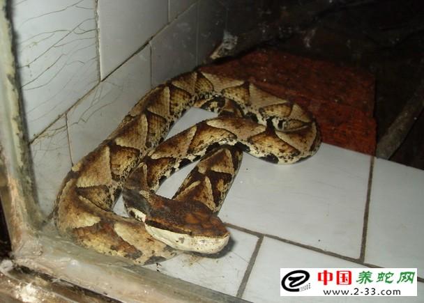 蛇种类名称图片大全