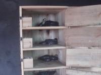 眼镜蛇木箱养殖视频_室内木箱养蛇_木箱养蛇技术