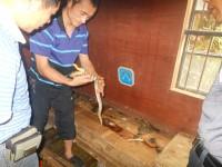 学员养殖大王蛇成功案例 (11810播放)