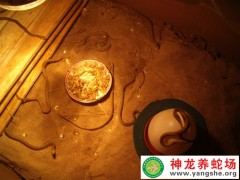 2009年大王蛇幼蛇养殖 (12)