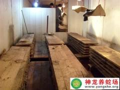 2013年大王蛇养殖 (6)