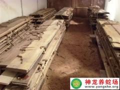 2013年大王蛇幼蛇养殖 (5)