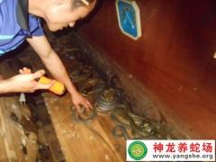 学员养蛇的蛇-老王二 (10)