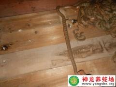 学员养蛇的蛇-老王一 (8)