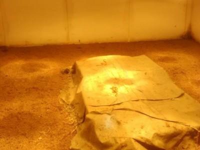 养蛇场的控温方法