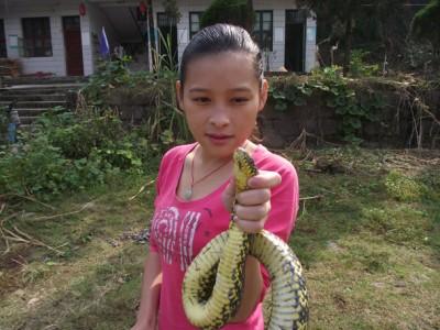 什么时侯学养蛇技术最好? (9237播放)