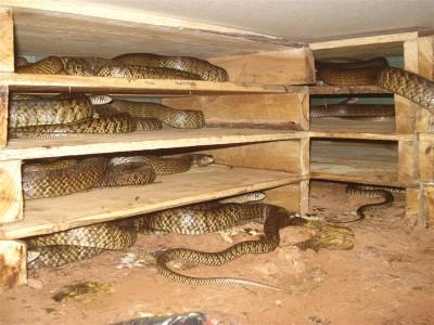 初次养蛇需要投资多少钱? (23044播放)