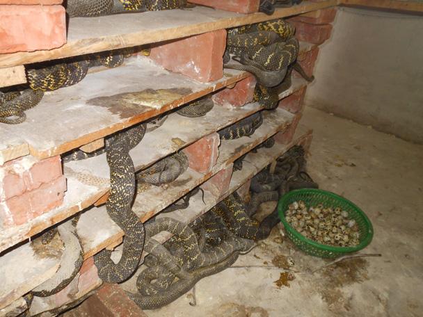 农村养蛇场建设图-养蛇场-养蛇图片-中国养蛇网
