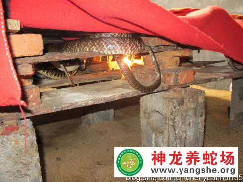 养蛇最好的温度和湿度