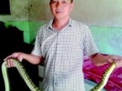农民自家楼上养蛇致富,已养1500多条