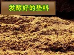发酵床养蛇菌种 ()
