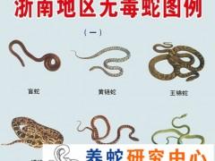 如何区分有毒蛇与无毒蛇